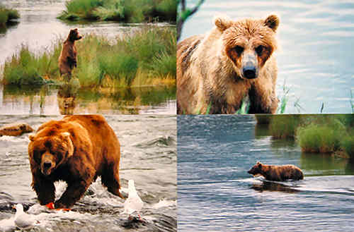 Mary Karam Gallary photographs bears